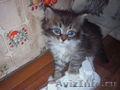 Отдам в добрые руки милых и очень красивых котят